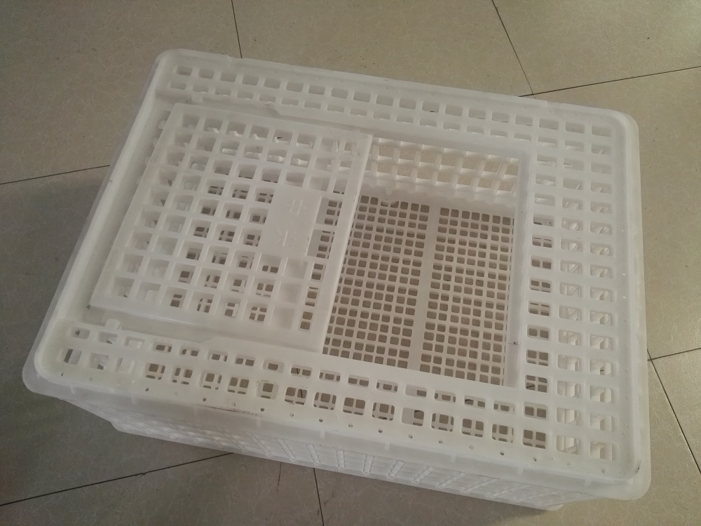 Plastic crate for live chicken transportation