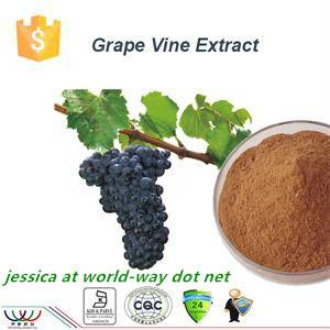 New extract!Grapevine extract with 5% resveratrol