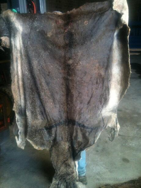 Wet Salted Donkey Hides/ Wet Salted Cow Hides/ Sheep Skins/ Goat Skins