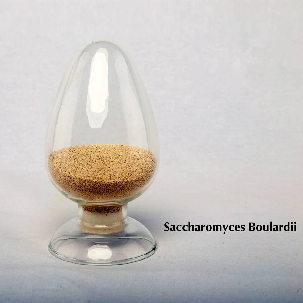 Saccharomyces Boulardii Yeast