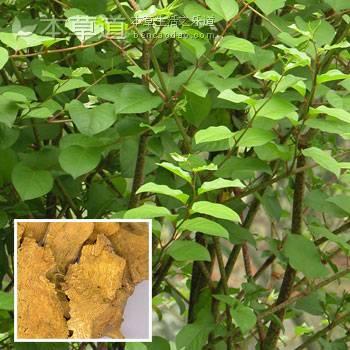 Polydatin Extracted from Polygonum Cuspidatum