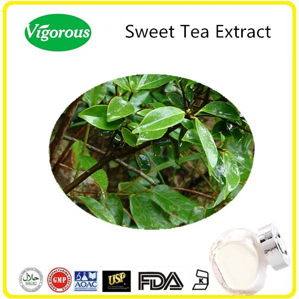 GMP manufacturer sweet tea extract/pure natural sweet tea powder/Rubus Suavissimus extract