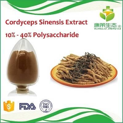 Cordyceps Sinensis/Cordyceps Militaris Extract Powder
