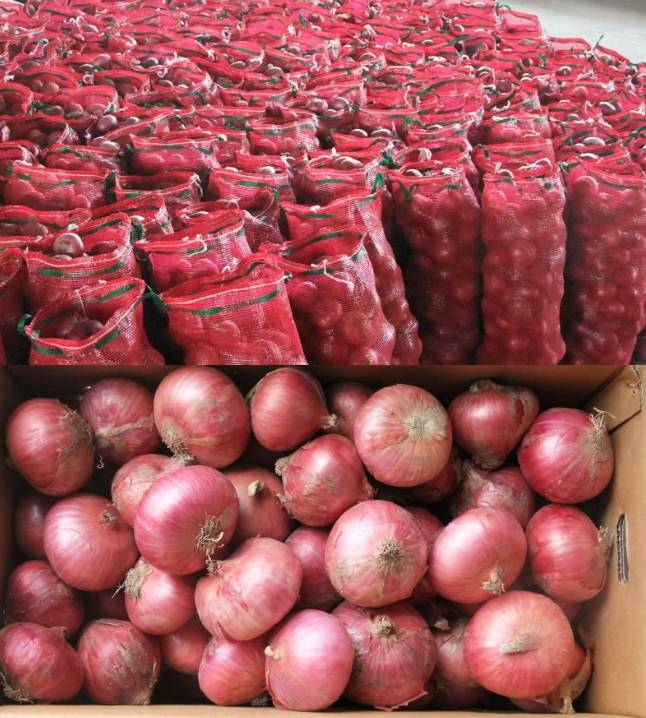 wholesale china India red onion for export