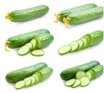 Short smooth cucumber hybrid seeds