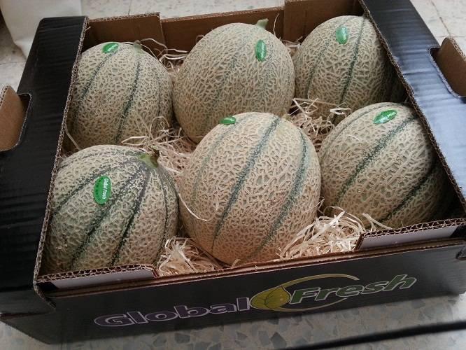 melon and watermelon