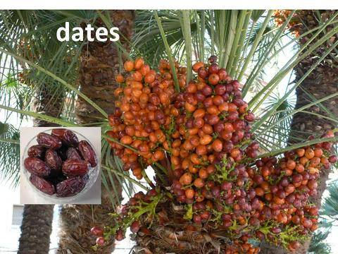 Fresh dates available
