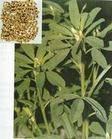 Fenugreek Seed Extract     4-Hydroxyisoleucine