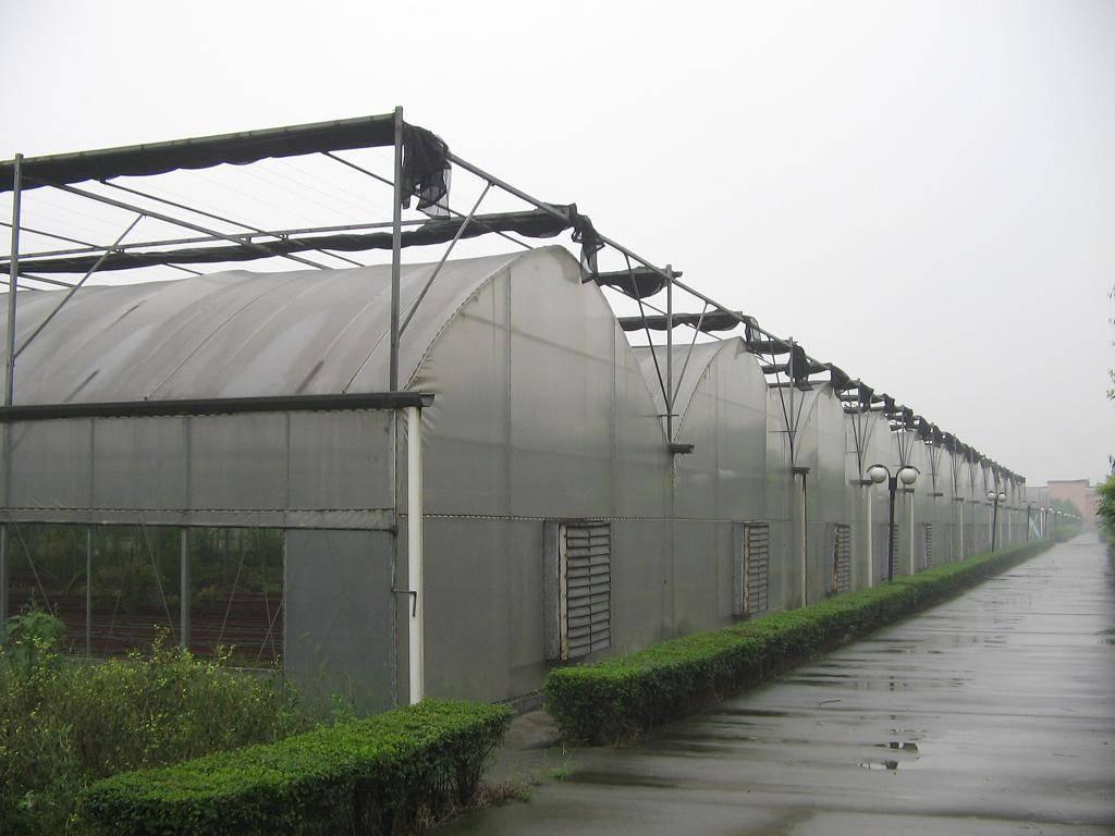 Film Multi-Span Greenhouse