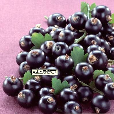 Jianhe Factory Supply Blueberry Extract