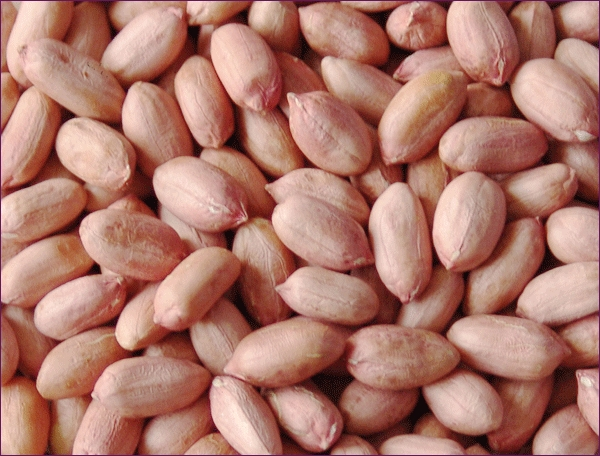 peanut kernel peanut in shell blanched penaut