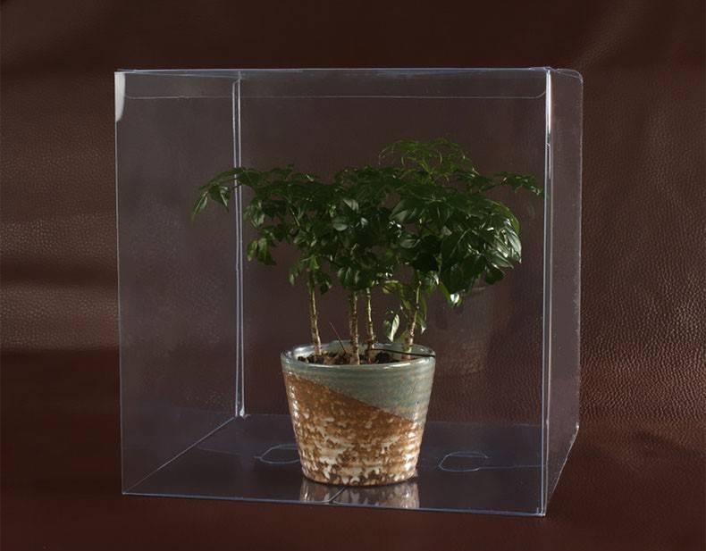 Transparent plastic boxes for plant PP PVC PET