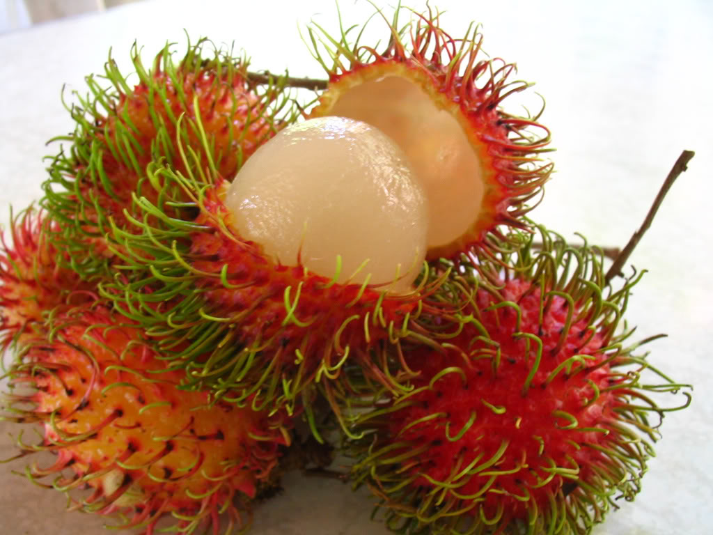fRESH Rambutan FOR SALE