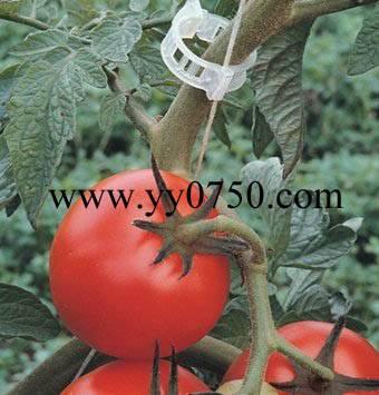 Large scale farm agriculture plastic tomato clip