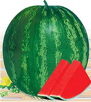 W06 Quanxin big size seedless watermelon seeds hybrid, watermelon seeds for planting