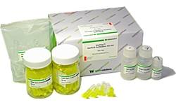 Gel/PCR Purification Mini Kit