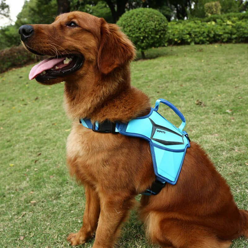 Professional Factory Direct Sale Custom Massage Pet Harness