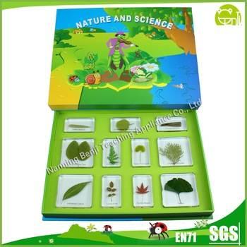 Leaves Embedded Specimens Educational Toys for Kids
