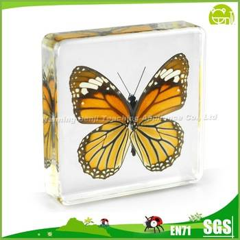 Benji Acrylic Specimens  Education equipment Butterfly Specimens