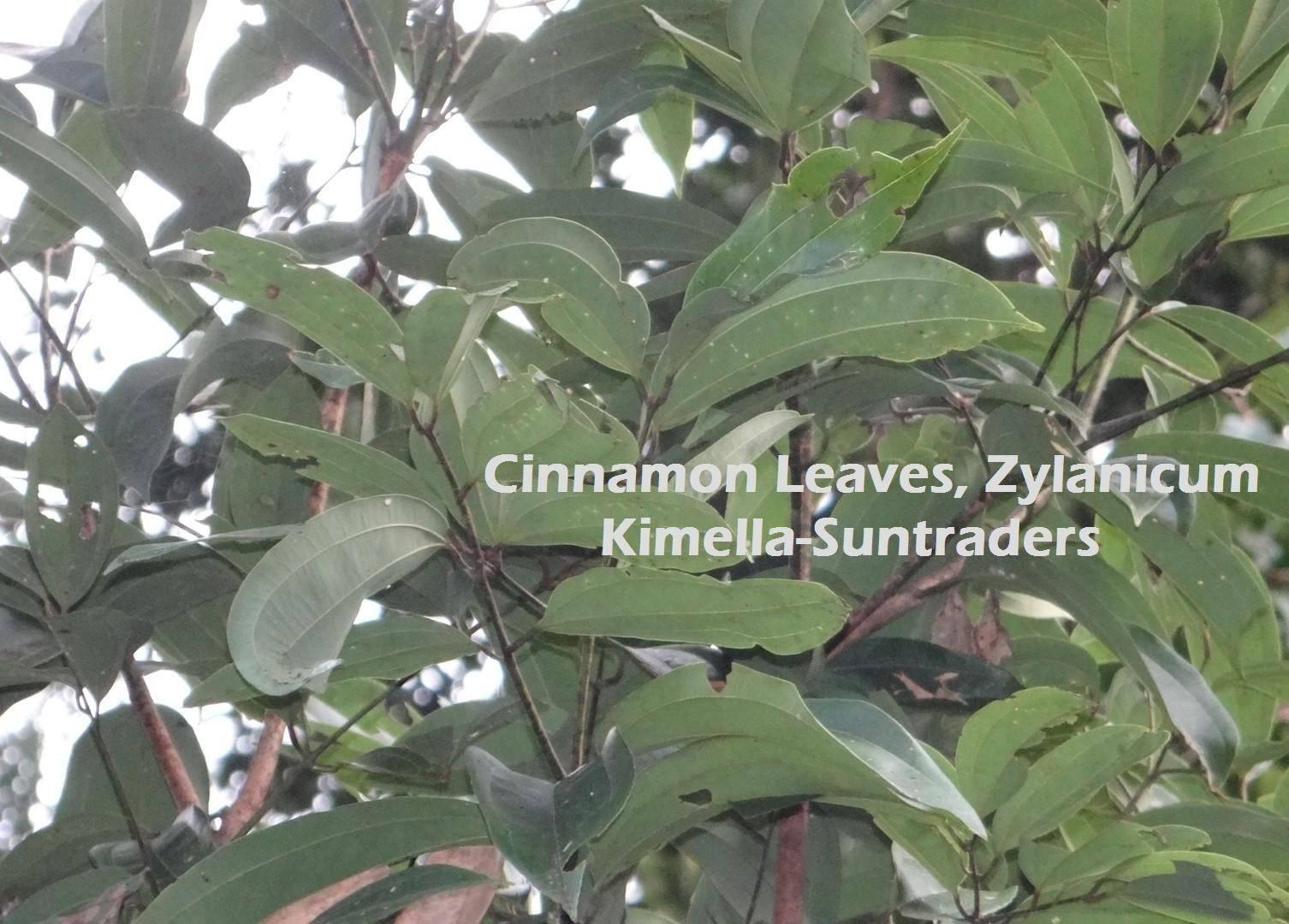 Cinnamon Leaves