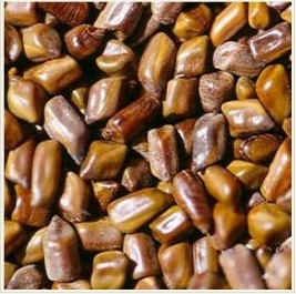 Cassia tora seed extract / Cassia obtusifolia seed extract(pores control)