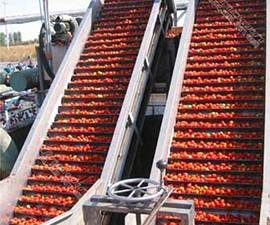 Triowin| Tomato Processing Machinery