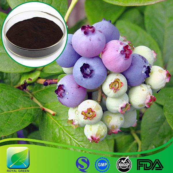 2016 Hot Sales Fresh Bilberry Extract