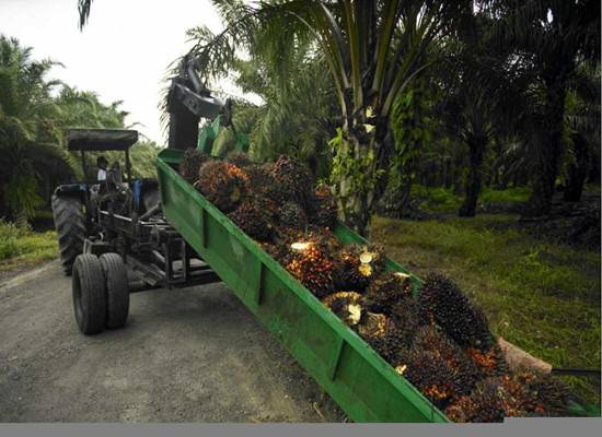 Hot sale crude palm oil extraction machine with low price