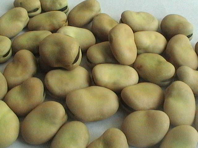 Wholesale Bulk Dry Broad Beans, Best Quality Broad beans, beans