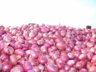 Whole sale fresh red onion in China