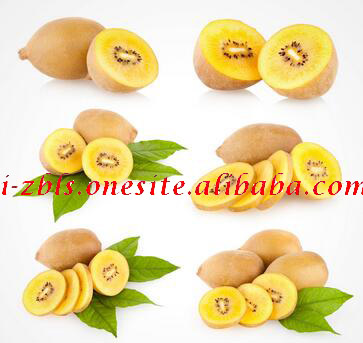Fresh Golden New crop Kiwi fruits Price, red Kiwi exporter from china