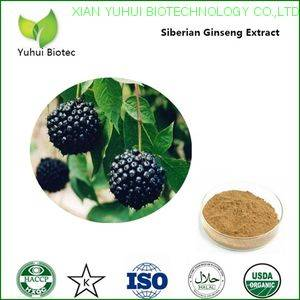 Siberian Ginseng Extract,eleutheroside b,siberian ginseng root extract,eleutheroside