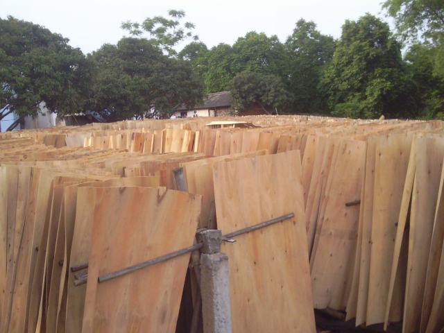 VIETNAM CHEAPEST SHORT CORE VENEER FOR MAKING PLYWOOD