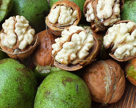 Chinese new crop dry In-shell walnuts 30-36mm origin supplier