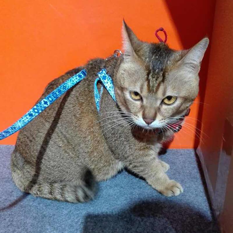 No minimum order custom made cat collar