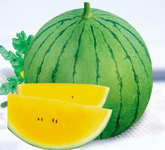 Yellow lady planting watermelon hybrid seeds