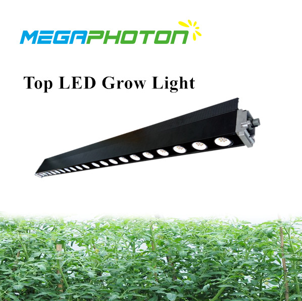 200w IP65 full spectrum Top LED Grow light special for greenhouse lighting project