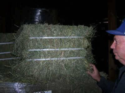 South African Grown Alfalfa Hay