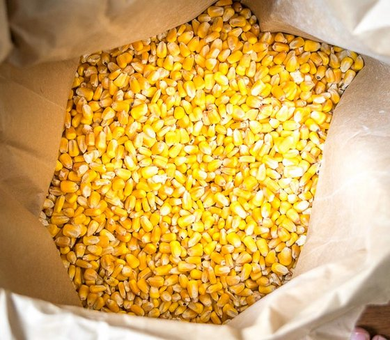 Best Wholesale price for Quality Yellow Corn for Sale