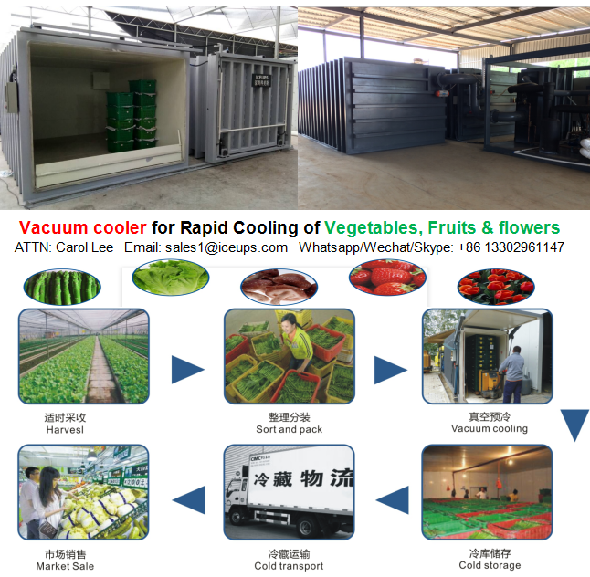 ICEUPS Vacuum Cooler with Top Quality(1 To 24 Pallets)