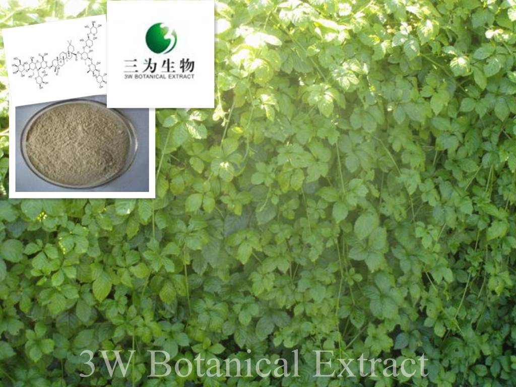 Gynostemma Extract(sales05@3wbio.com)
