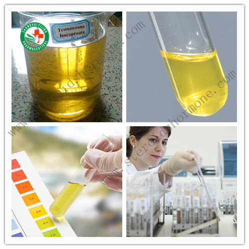 Protein Gains Injectable Anabolic Steroids Testosterone Isocaproate 200mg / ml CAS 15262-86-9