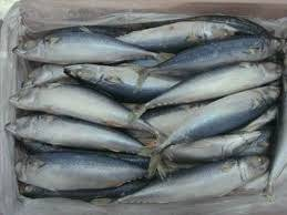 Frozen Stockfish, Horse Mackerel Fish, Herring Fish