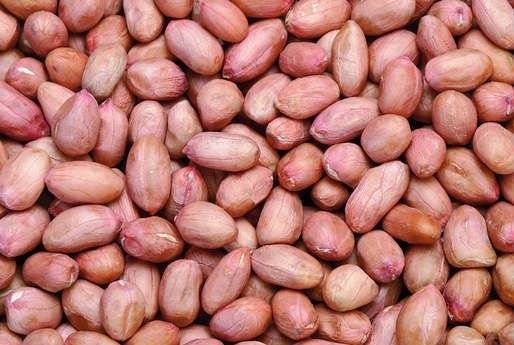 Jumbo Raw Peanuts No Shell With High Quality