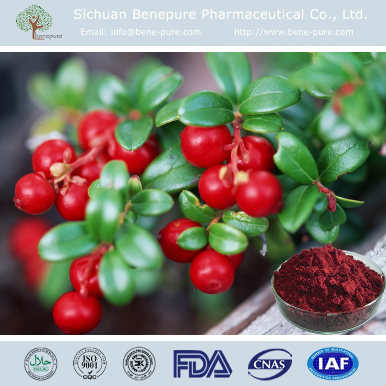 Natural Antioxidant Ingredients Pronthocyanidins OPC from Cranberry Extract for cosmetics,BENEPURE