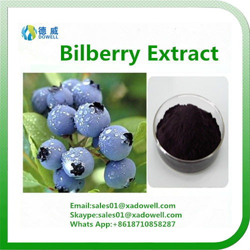 High Quality Bilberry Extract Anthocyandins 5-25%