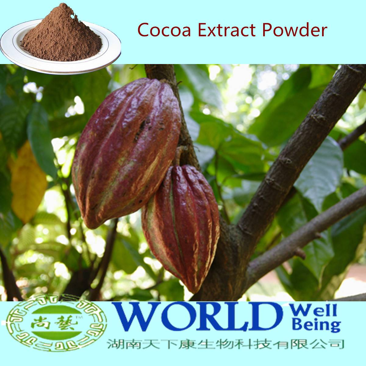 100% Natural Low Price 10%-20%Theobromine Cocoa Bean Extract Powder For Sale Cocoa Powder Theobromin