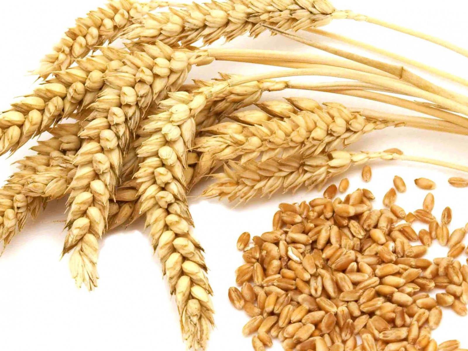 Wheat/ Milling Wheat/ Grade 1