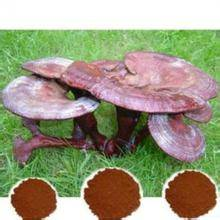 reishi mushroom extract FDA,GMP certified