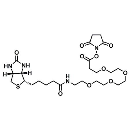 (+)-Biotin-PEG4-NHS Ester;CAS#459426-22-3